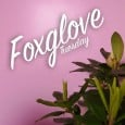 Check out this awesome new track from Manchester-based Foxglove. So cool. Next level vibes.